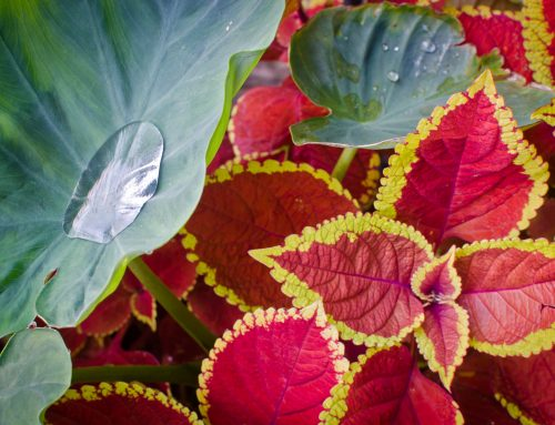 Top Tips for keeping the tropical feel to your garden this Autumn