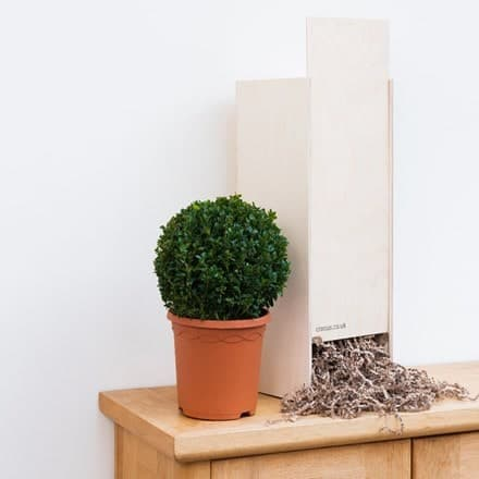 Buxus sempervirens - Gift Crate