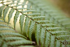 Ferns & Fern like plants