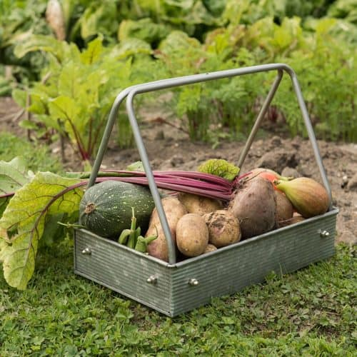 Gorgeous Metal Harvesting Tray for Gardening - Metal Planting Tray or Trug