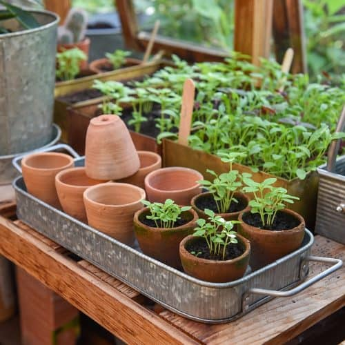 Traditional Terracotta grow pots and tray - Buy Chai Wala Pots for gardening