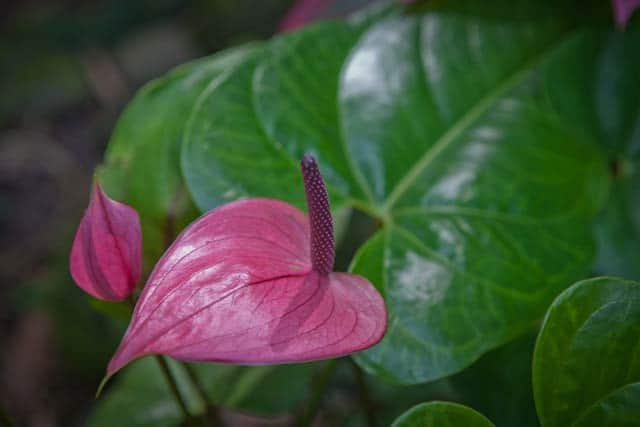 Buy exotic plants and tropical plants online