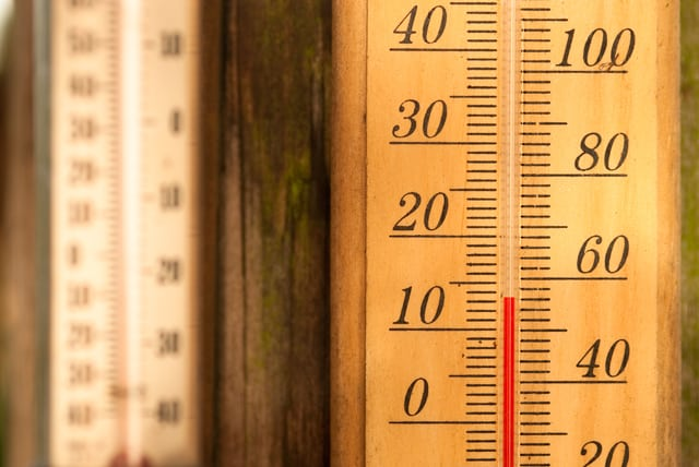 Protecting Tropical Plants this winter with a thermometer